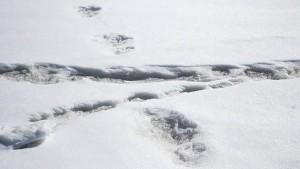 Spott für Indiens Armee nach Entdeckung von angeblichen Yeti-Spuren