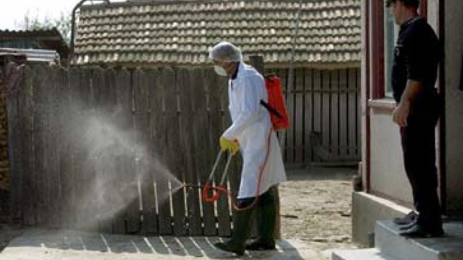 Gegen die Vogelgrippe gibt es noch kein Mittel