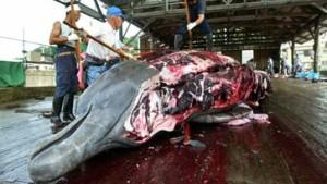 Japanische Walfangflotte sticht in See