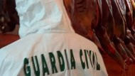 Europol nimmt Hintermänner des Pferdefleisch-Skandals fest