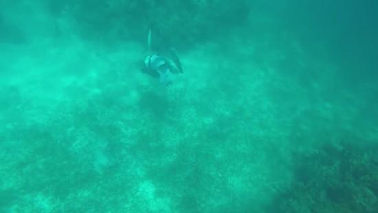 Hai beißt Harpunenfischer in den Kopf