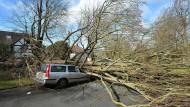 In der Stadt Brighton hat Sturmtief Katie am Ostermontag nicht nur für Stromausfälle gesorgt, sondern auch Bäume entwurzelt.