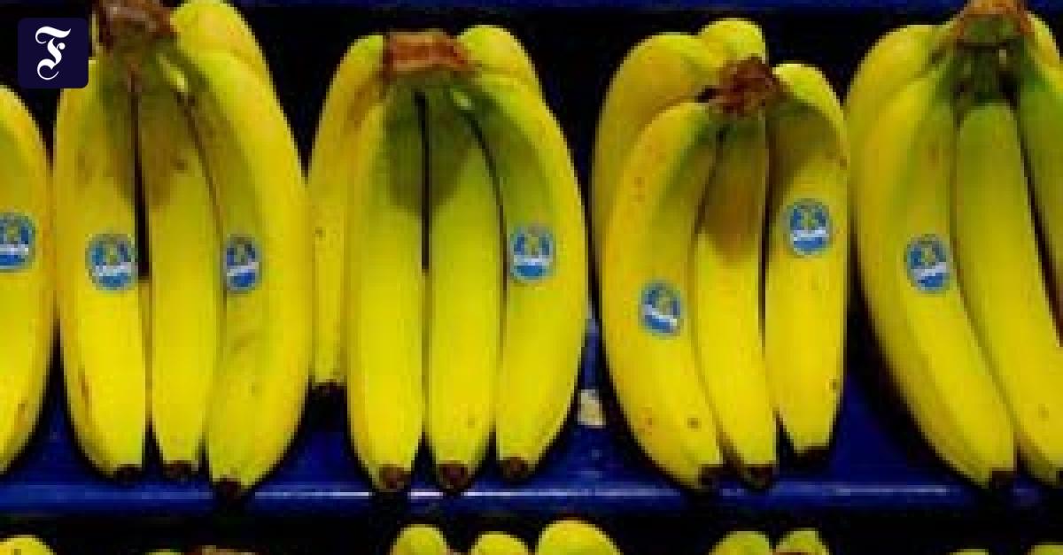 Außergewöhnlich Australien: Bananen kommen in den Safe - Gesellschaft - FAZ &AL_67