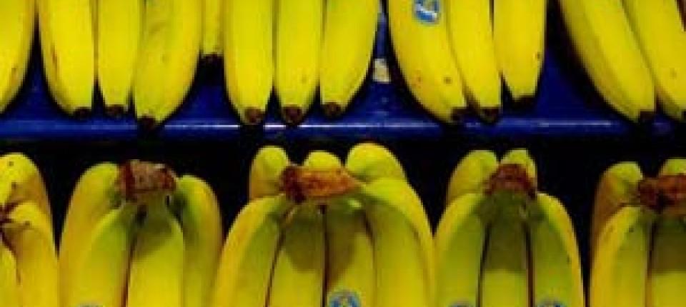 Lieblings Australien: Bananen kommen in den Safe - Gesellschaft - FAZ &WJ_45