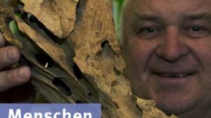 Alles, was Sie über Holzwürmer wissen wollten