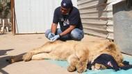 Rettung von Zootieren im Irak gestoppt