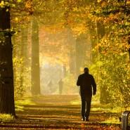 Wenn auf den langen goldenen Herbst jetzt kein sibirischer Dezember folgt, schlägt das Jahr 2014 alle Wärmerekorde.