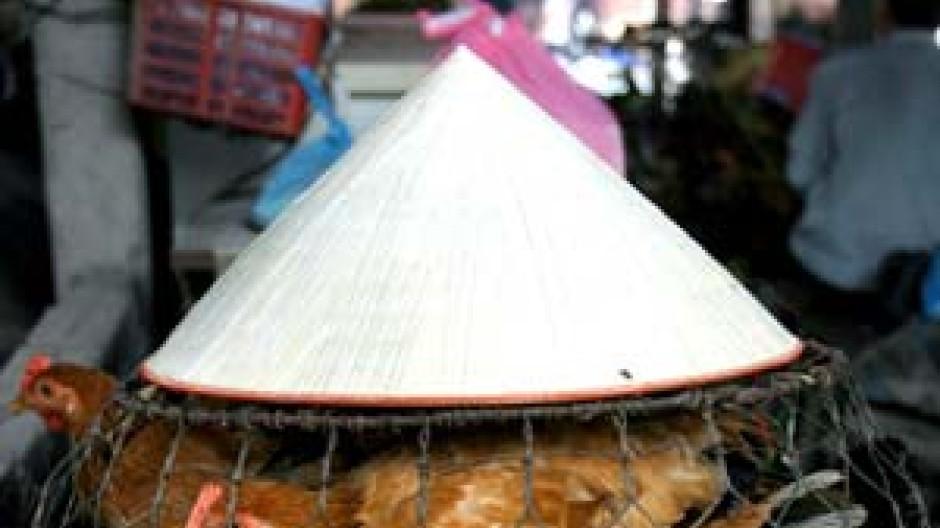In Asien starben bereits 60 Menschen an der Vogelgrippe