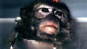EU verbietet Tierversuche ab 2005