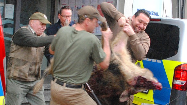 Heide in Schleswig-Holstein: Aggressive Wildschweine attackieren Menschen in Innenstadt