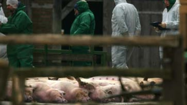 Weiterer Mastbetrieb von Tierseuche betroffen