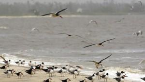 Vogelbeobachter in großer Sorge
