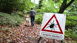 Auch Mücken könnten Borreliose übertragen