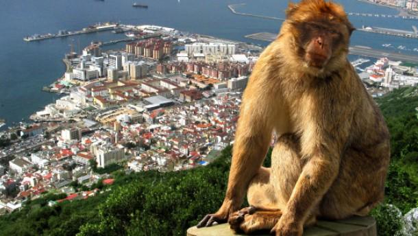Affenliebe aus Staatsräson