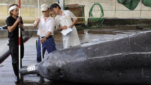 Der große Walbetrug
