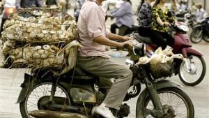 """""""Still ist es in Vietnam nur auf dem Friedhof"""""""