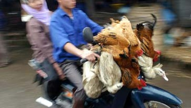 Vietnam: Neuer Fall von Vogelgrippe beim Menschen