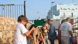 Bis zu 50 Tote vor Lampedusa