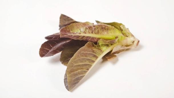 Blattsalate - Verschiedene Salate als Fotoillustration zum Thema Gesund leben