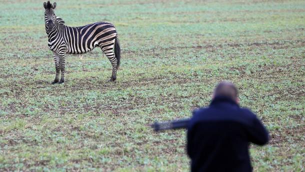 Rostock verteidigt tödliche Schüsse auf Zirkus-Zebra