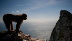Was ist das Hobby eines Affen?