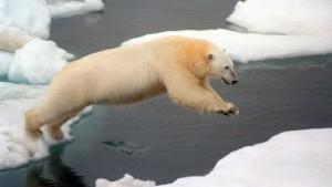 Die Eisbären kehren zurück