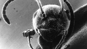 Zahl der Insektenarten geringer als gedacht