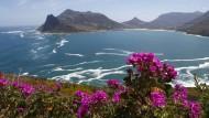 Weltnaturerbe: An kaum einem anderen Ort gibt es so viele seltene Pflanzen wie in der Cape Floral Region.