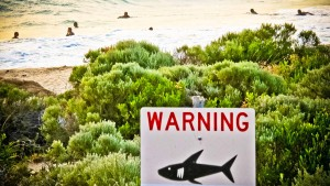 2015 so viele Hai-Attacken wie noch nie