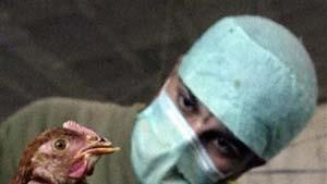 Neuer Impfstoff gegen Vogelgrippe
