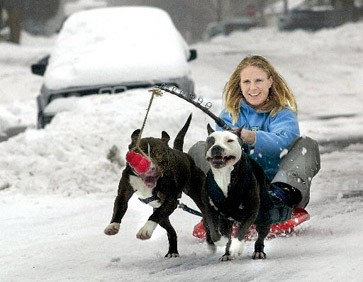 Hund zu dick - Hundeinfoportal