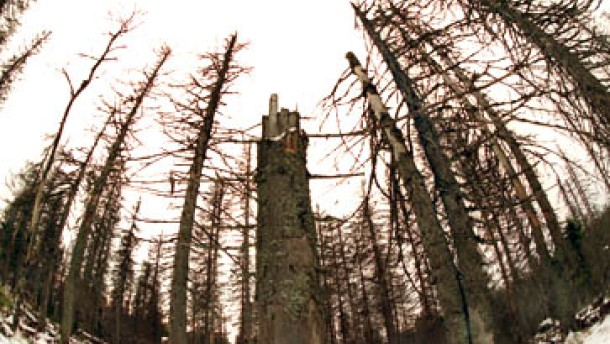 Nur kurze Erholung für Europas Wald