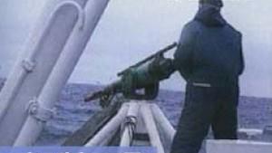 Streit um Wiederaufnahme des kommerziellen Walfangs