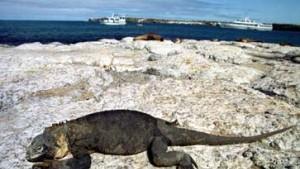 Galapagos-Inseln bieten einzigartigen Tierarten Lebensraum