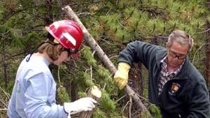 Mehr als 200.000 Hektar Wald in Brand