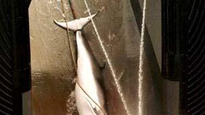 Norwegen: Gen-Datenbank soll gegen Wilderei schützen