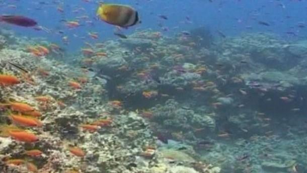 Australien will seine Meere besser schützen