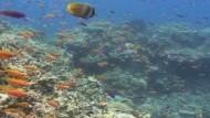 Die australische Regierung plant, das weltgrößte Netzwerk von Meeresschutzparks einzurichten. Herzstück soll der Schutz des Great Barrier Reefs sein.