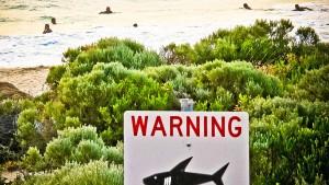 Mehr tödliche Haiangriffe in Australien