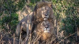 """""""Homosexuelles Verhalten ist in der Tierwelt weit verbreitet"""""""