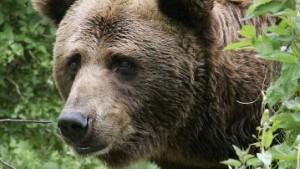 Wenn es doch bloß ein Bär wär'