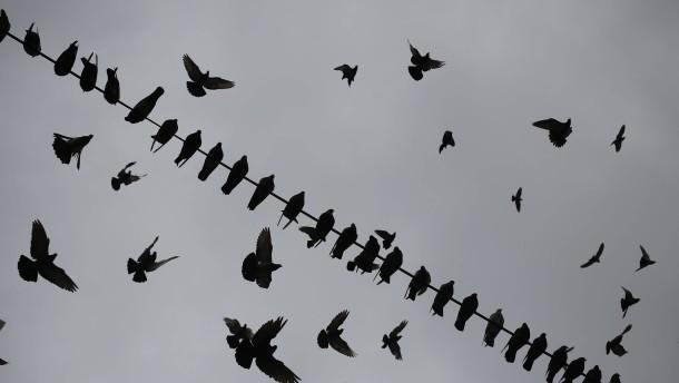 Erstmals West-Nil-Infektion bei Vogel in Deutschland nachgewiesen
