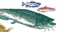 Der Beruf des Flussfischers hat seine Haken