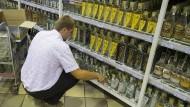 Ein Mitarbeiter füllt in einem ukrainischen Supermarkt das Spirituosenregal auf. Verschiedene Läden im Osten des Landes sollen gepanschten Alkohol verkauft haben.