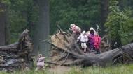 """""""Viele Kinder sind zu viel eingepfercht, hier darf man alles anfassen; gestritten wird so gut wie gar nicht"""": Kinder im Naturspielplatz Wald."""