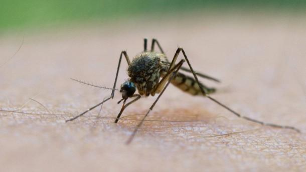 Erster Impfstoff gegen Malaria steht vor Zulassung