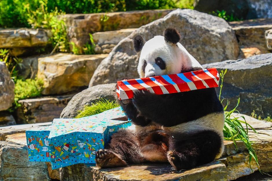 Bescherung im Zoo: Wenn Tiere Geschenke bekommen