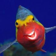 Ist das kein süßes Lächeln, mit dem dieses Sparisoma den Fotografen grüßt? Geschossen hat die Aufnahme Arthur Telle Thiemenn vor der kanarischen Insel El Hierro.
