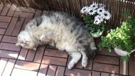 So eine Katze gibt's kein zweites Mal auf der Welt: Lilo beim Sonnen.