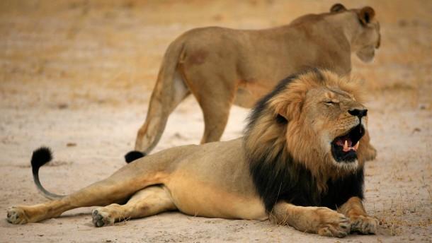 Cecils Jäger eröffnet seine Praxis wieder